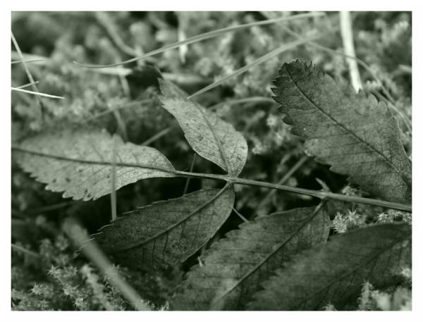 Leaf Litter Study