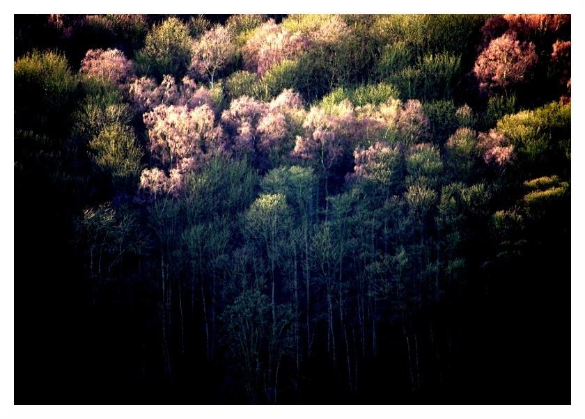 shining cliff woods