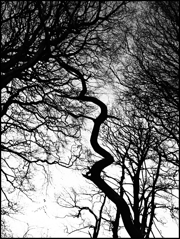 curly spiral tree chevin