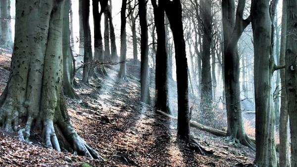 dramatic tone belper woods