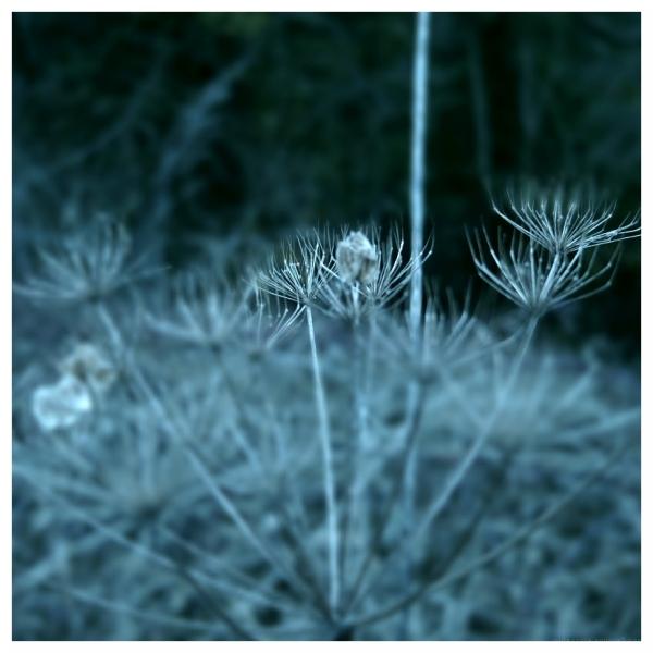 Spiky Winter Stems