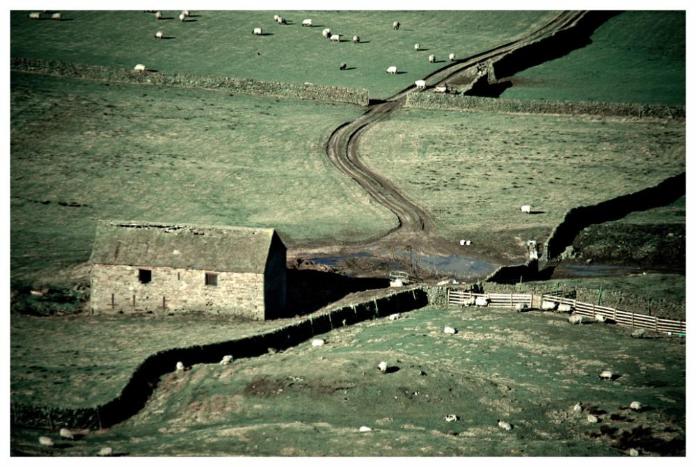 barns sheep peak district
