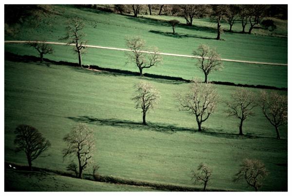 trees fields derbyshire