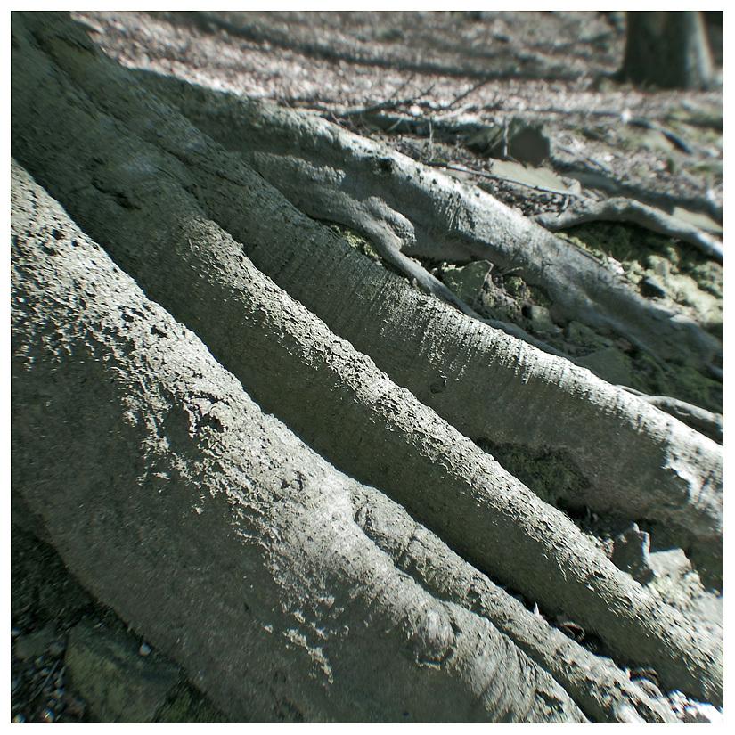 tree roots woods belper