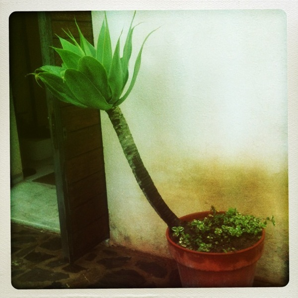 Hipstamatic Pot Plant