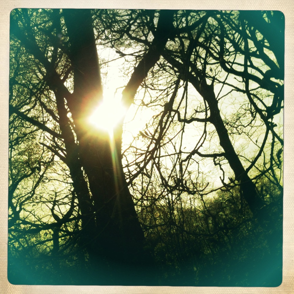 sunlight through trees in may