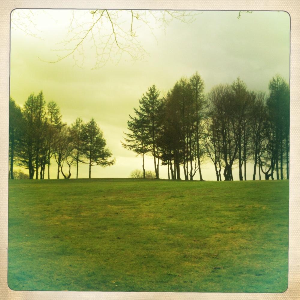trees on skyline