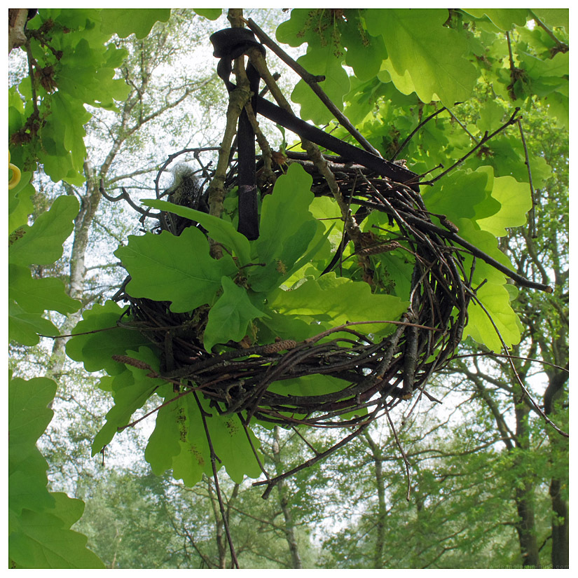 tree offering pagan ritual token religion