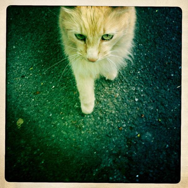 friendly cat belper mill street