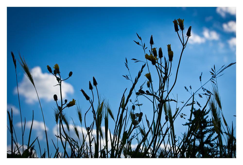 bits bobs plants grasses sky