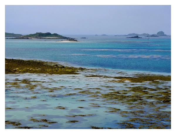 The Lovely Blue Ocean