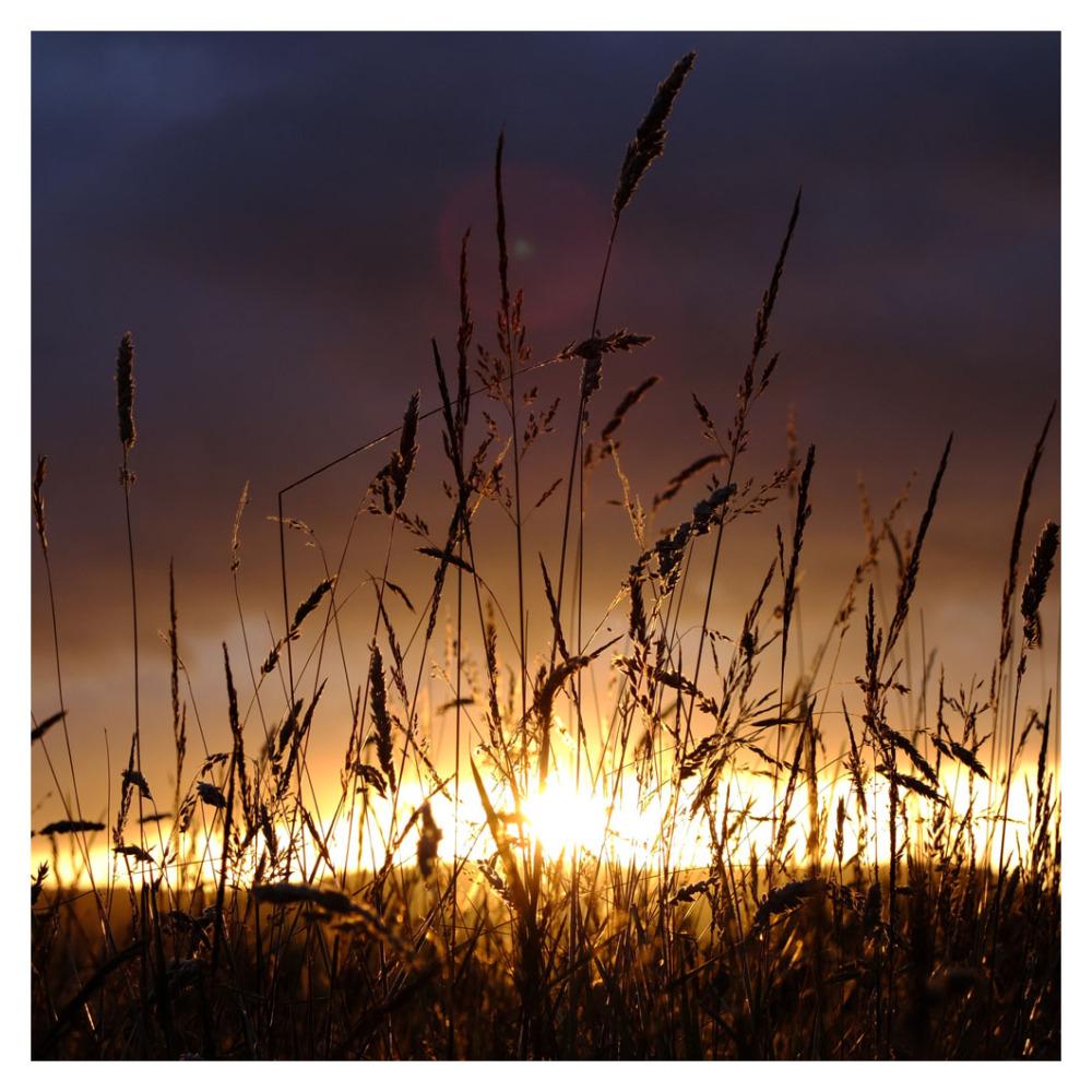 grasses sunlight sidmouth Devon