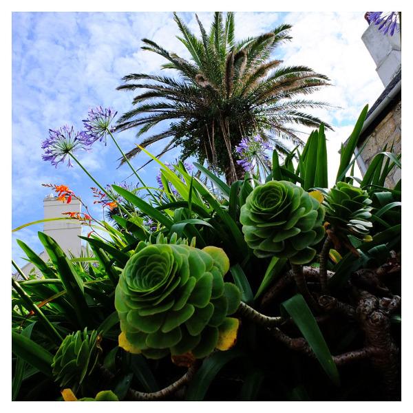 verdant vegetation st mary's isles scilly