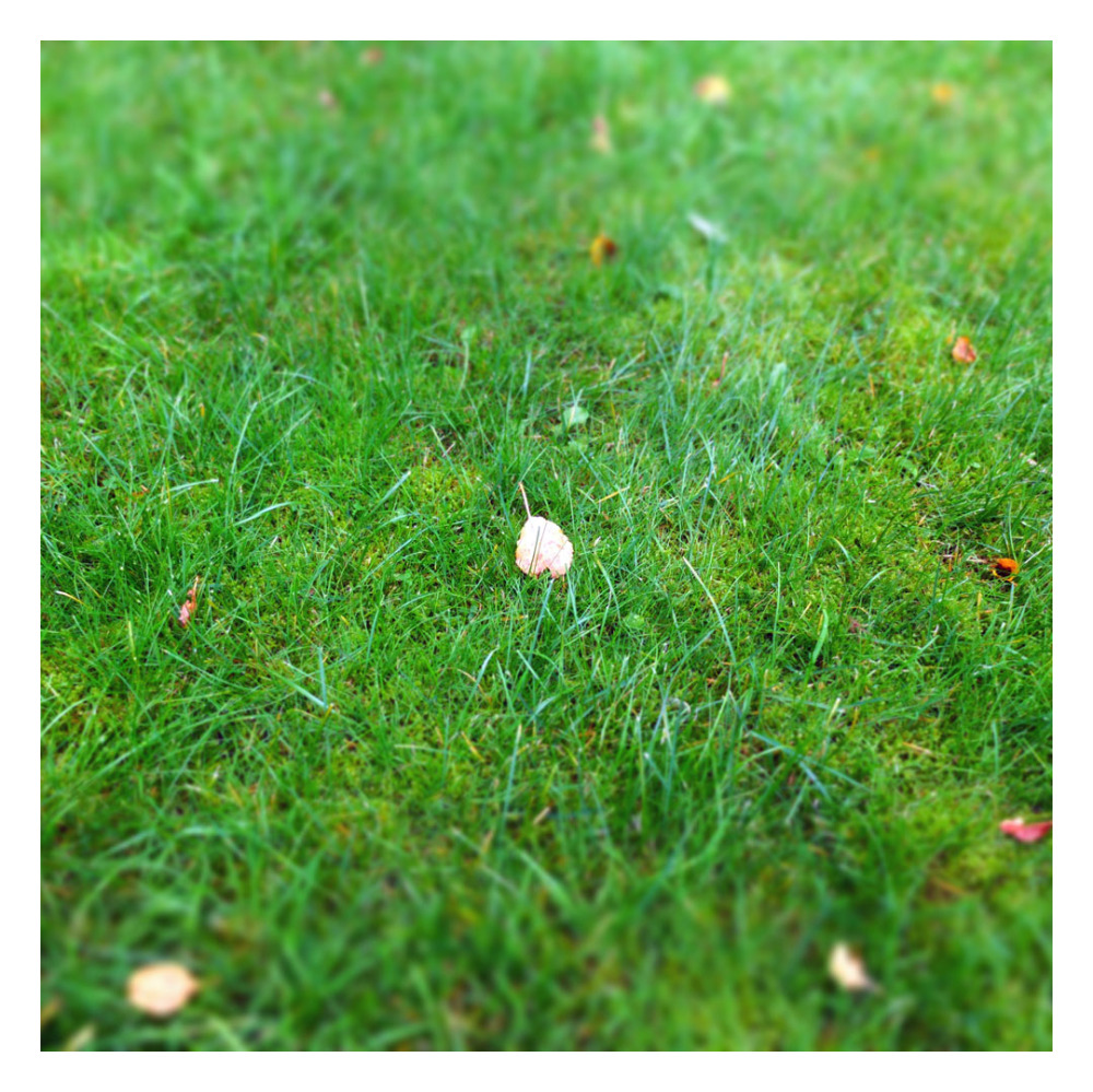 first golden leaf october end summer
