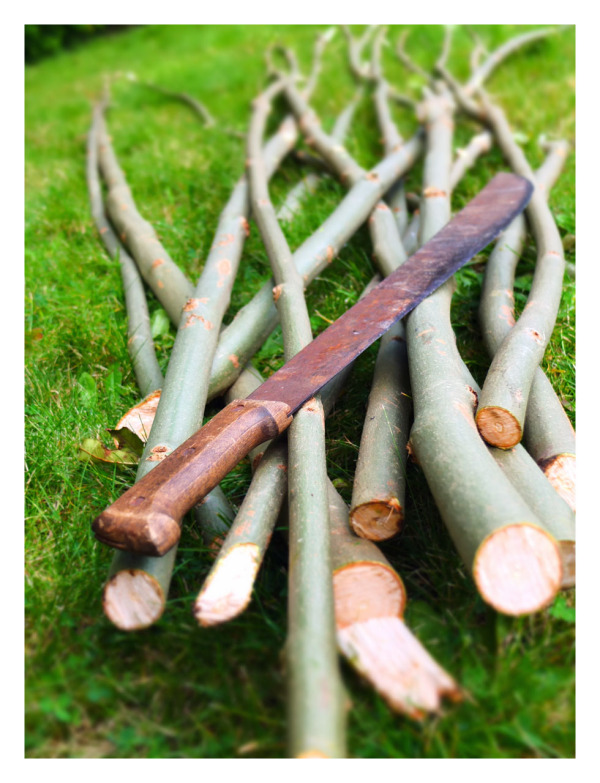 Cut Ash Branches & Machete