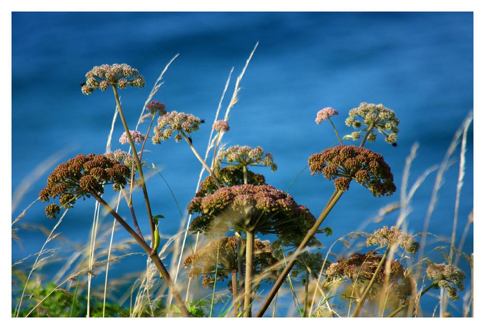 coastland plants pembrokeshire
