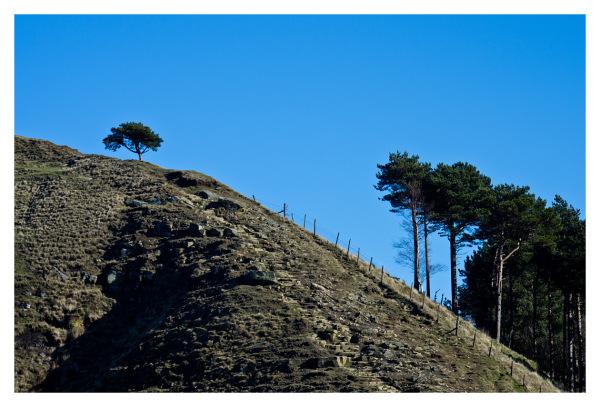 tree hill top climb derbyshire