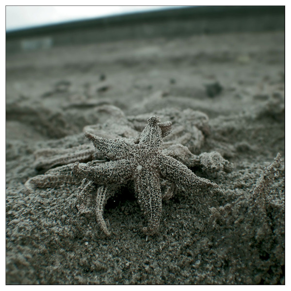 starfish dead washed ashore Skegness