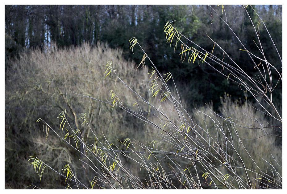 willow tree river trent beeston