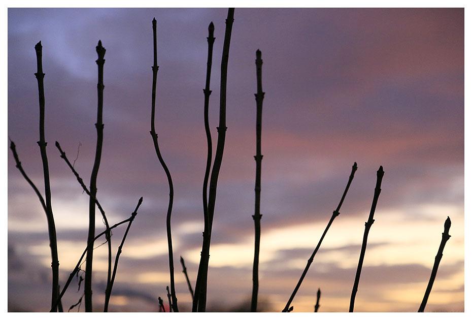 sticks sunset beeston attenborough