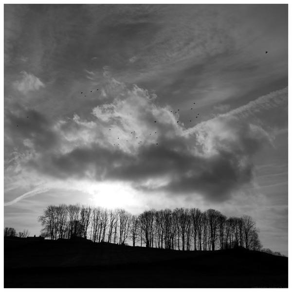 treeline skyline silhouette flock crows