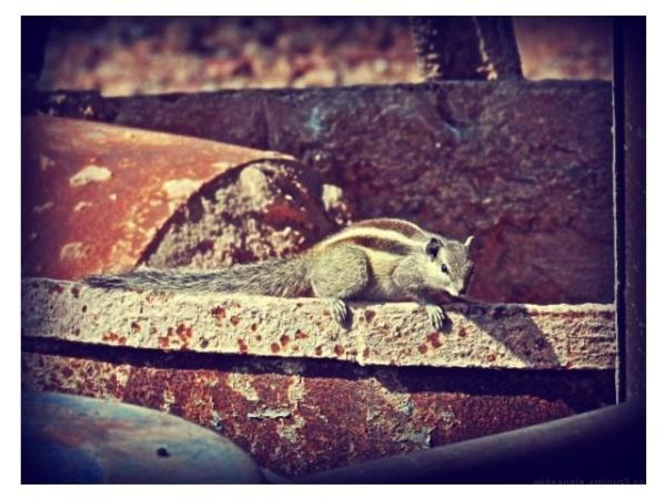 Squirrel new delhi india