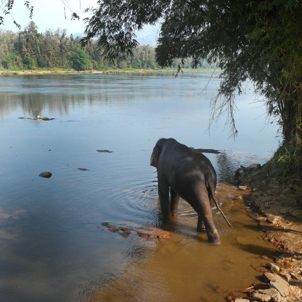 elephant bathing lake kerala