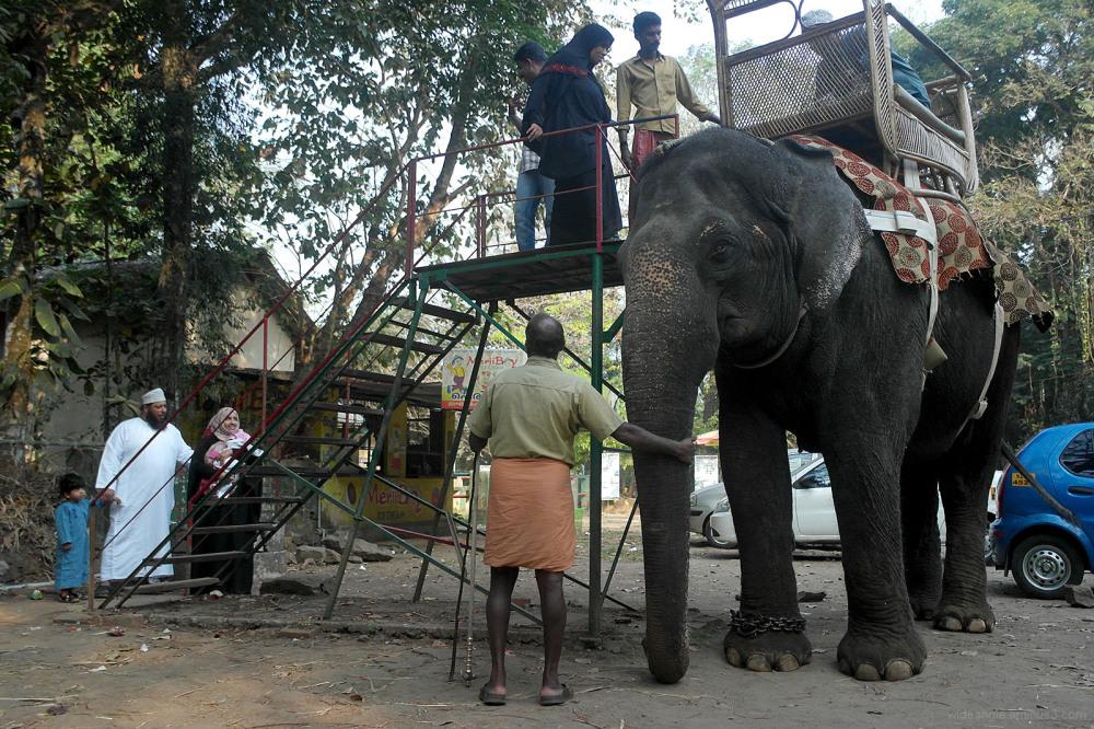 ride elephant family kerala india