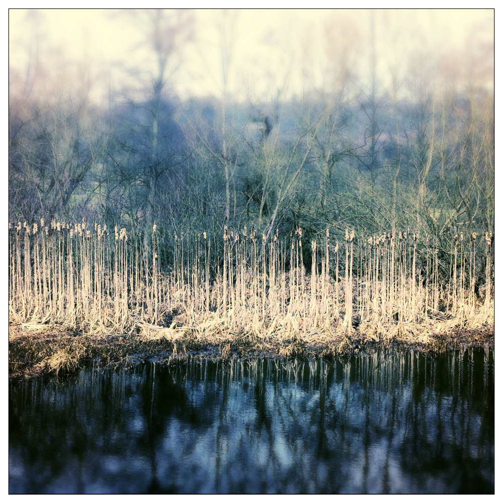 reeds cromford canal april cold