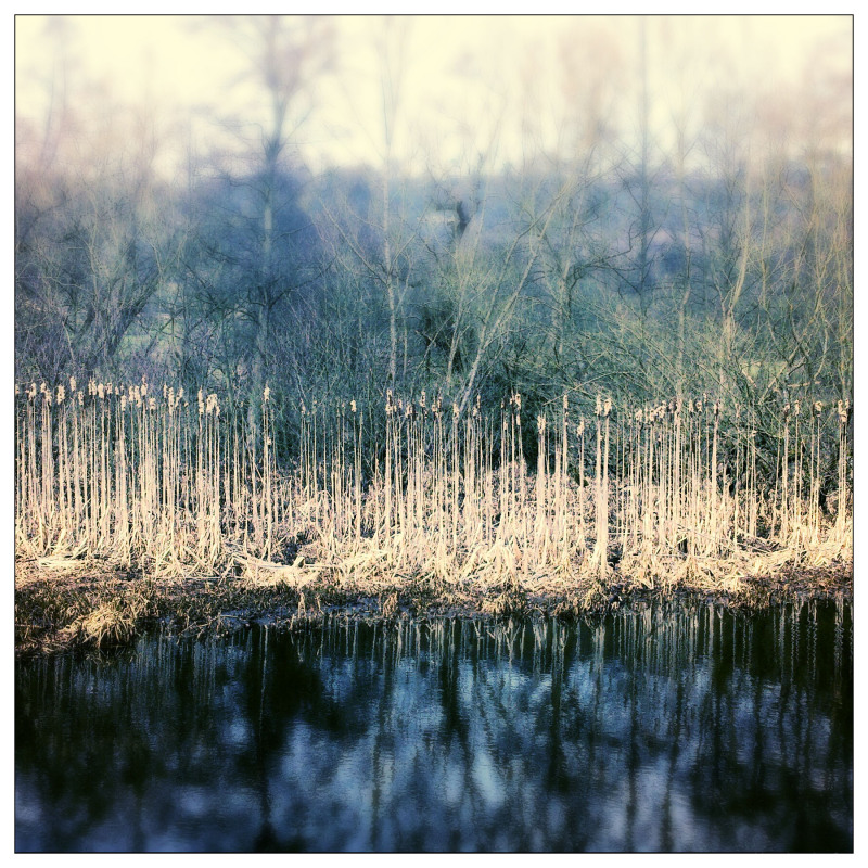 Aminus3 Color Featured photo Reeds, Cromford Canal | 11 April 2013