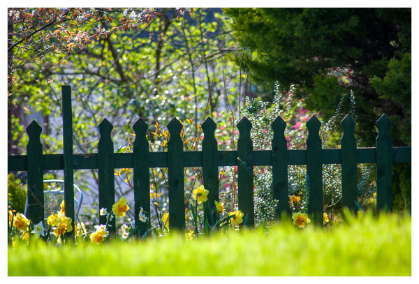 garden fence bright green sunny day spring