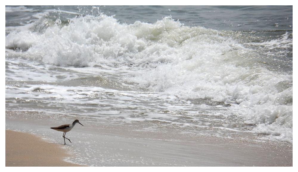 wading bird braving waves