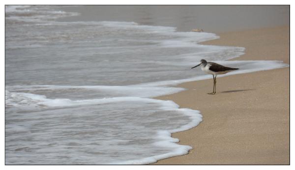 A Shoreline Forager