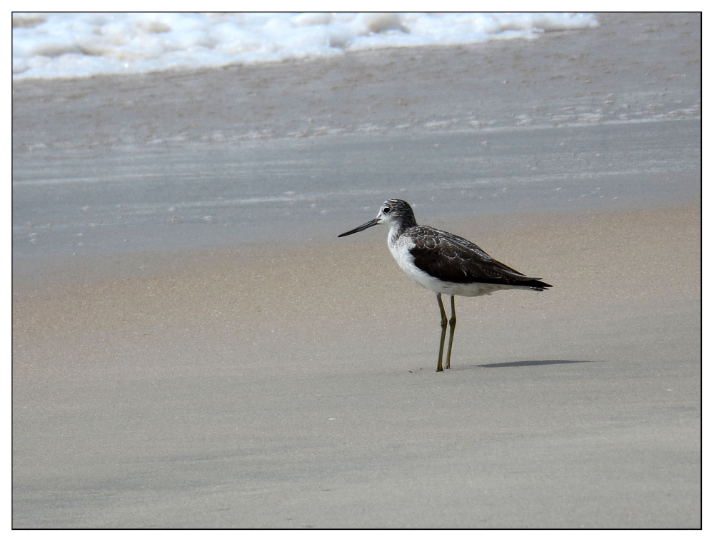 wading bird kerala beach