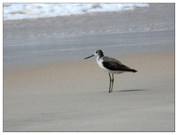 A Wading Bird