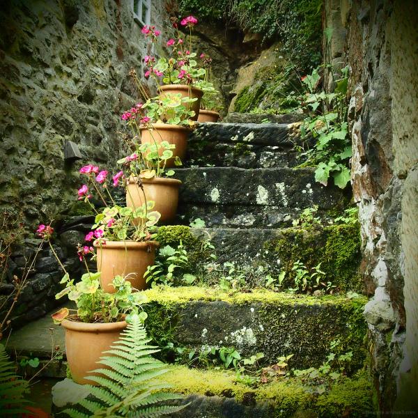plant pots steps