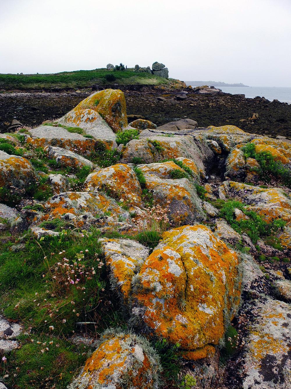 orange lichen rocks scilly islands