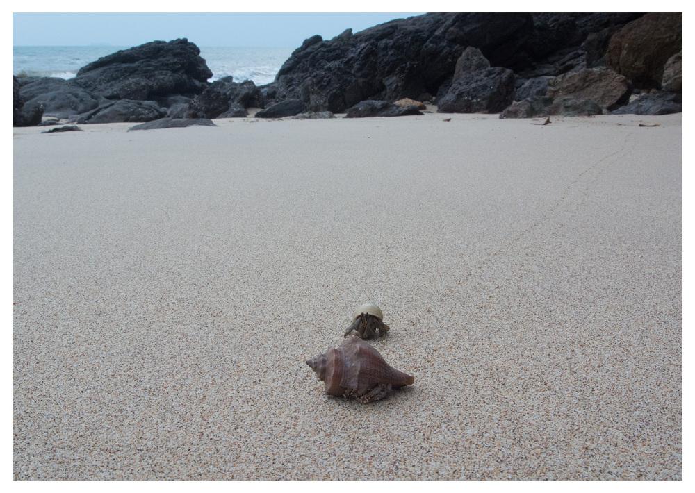 Hermit Crabs Long Beach Koh Lanta Thailand