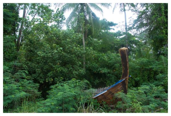 wooden boat jungle vegetation