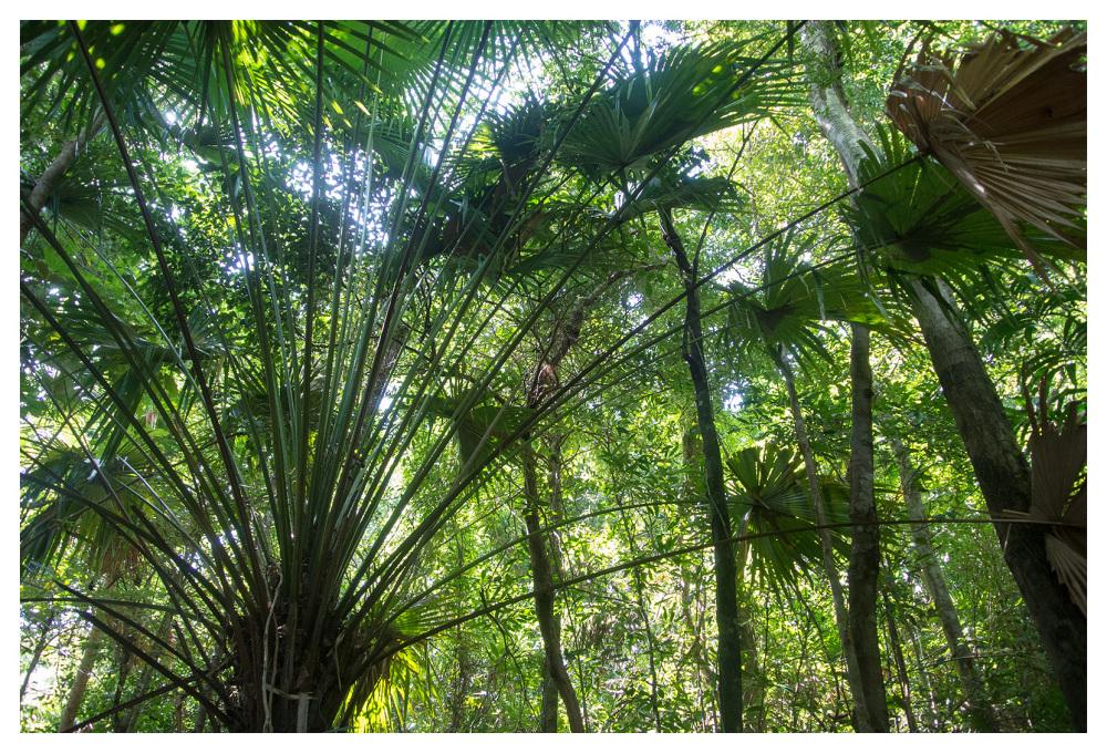 jungle palms koh lanta thailand