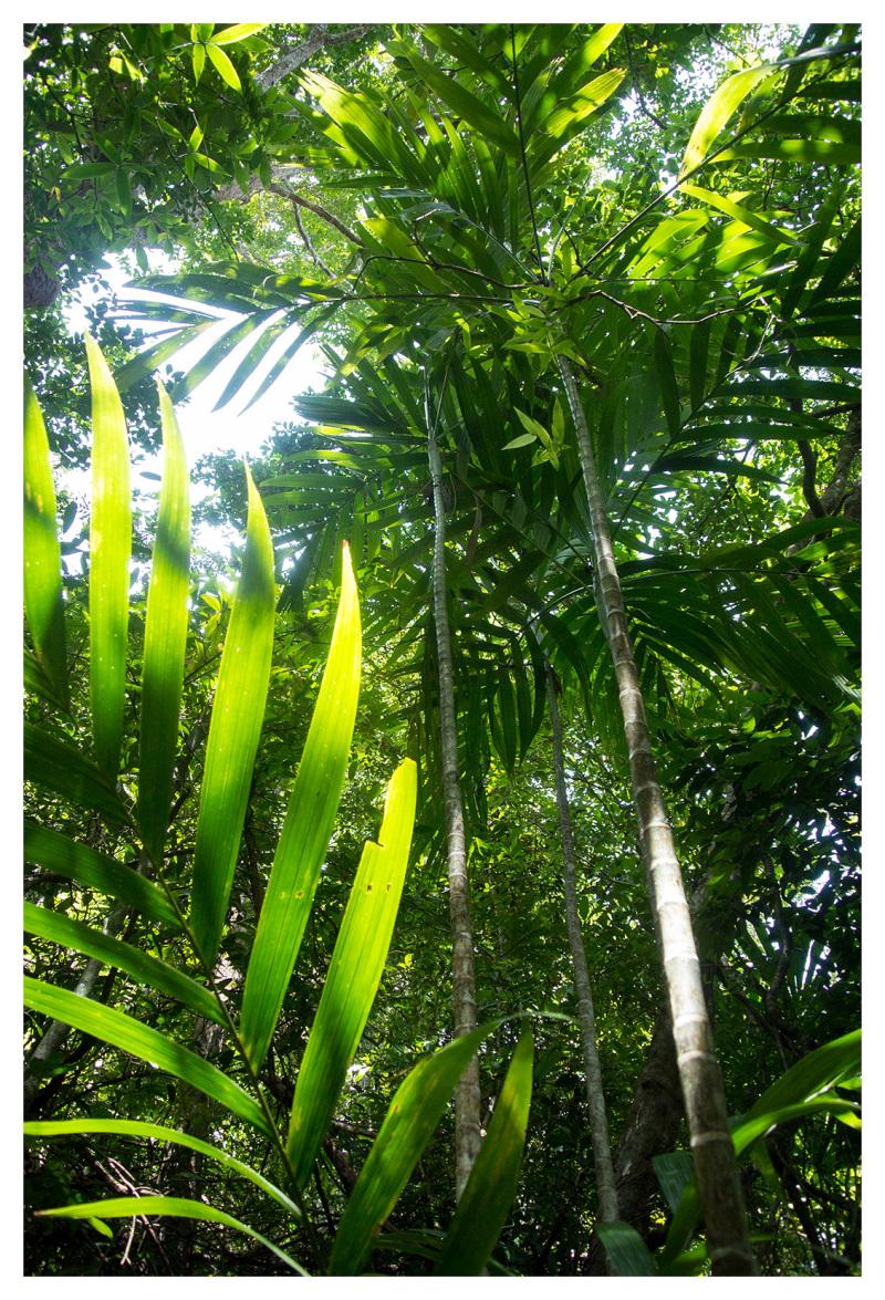 jungle vegetation koh lanta thailand