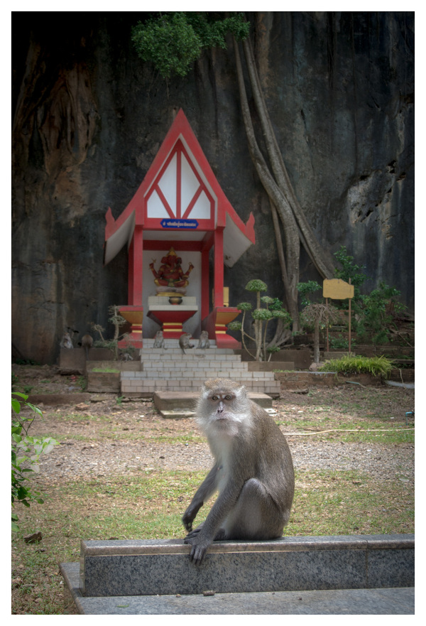sitting spot meditation temple macaque krabi thail