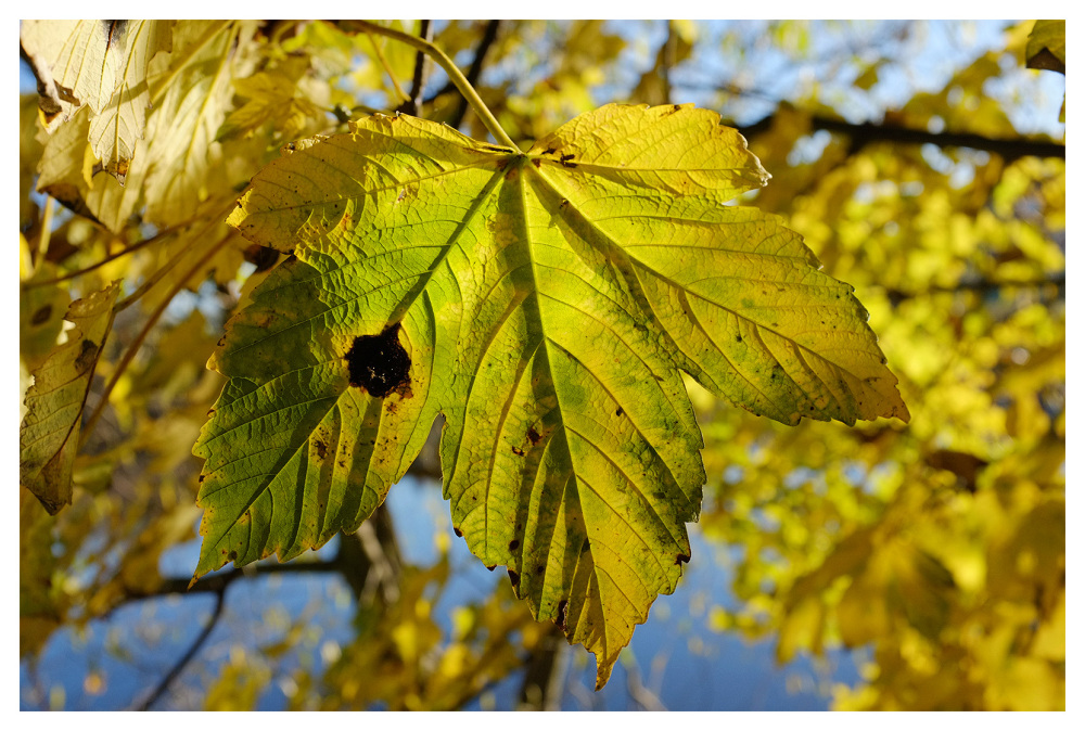 bright leaf green yellow autumn golds