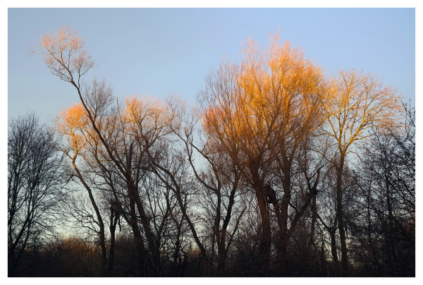 flaming trees sunset beeston