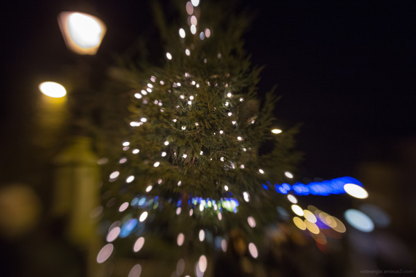 Belper Xmas Tree