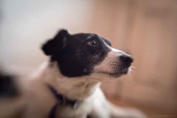 Sprocket on a Lensbaby