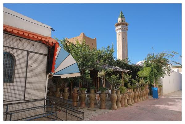 plants pots monastir tunisia