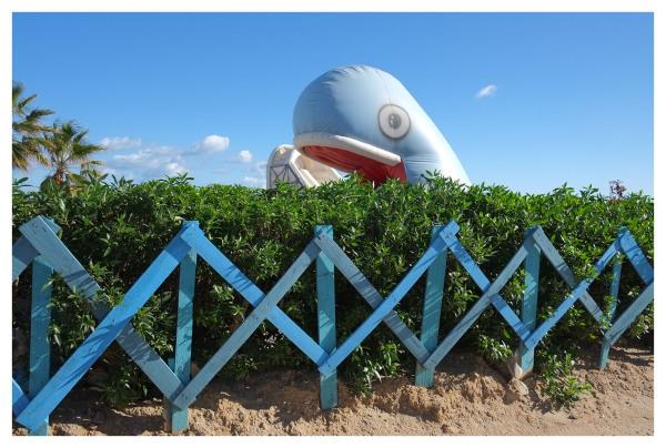 blue whale monastir tunisia