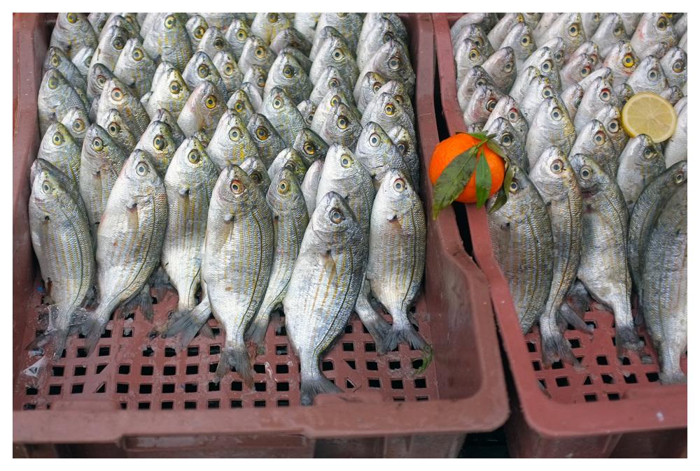 oranges fish lemons sousse tunisia