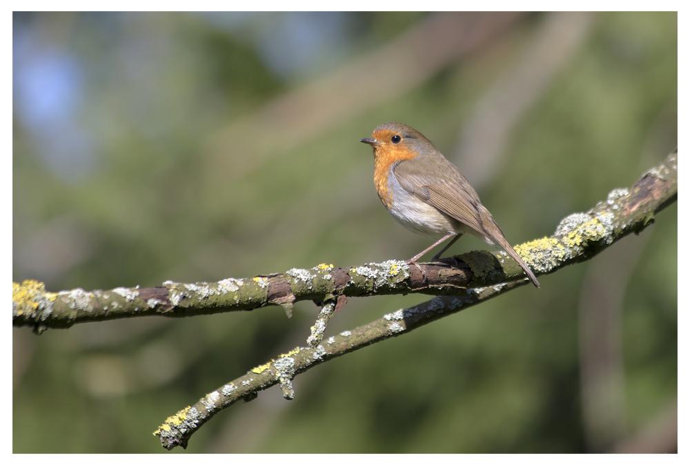 robins garden belper